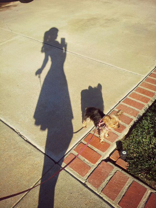 how to take your dog for a walk